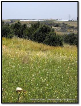 Nature, near Sderot