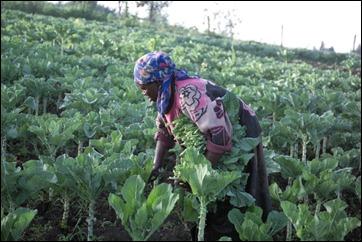 An African farmer